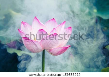 lotus flower in the morning mist - stock photo