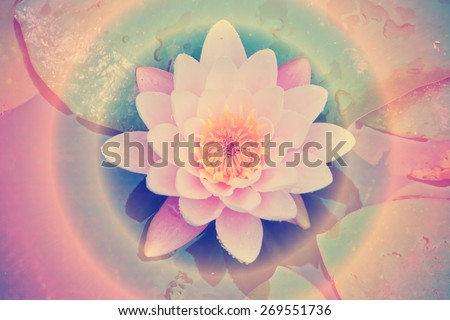 Lotus flower in the water - instagram style - stock photo