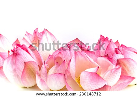 Lotus flower isolated on white - stock photo