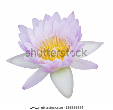 Lotus flower on a isolate background - stock photo
