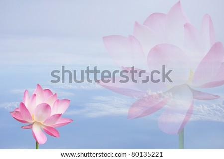 Lotus Flower on sky - stock photo