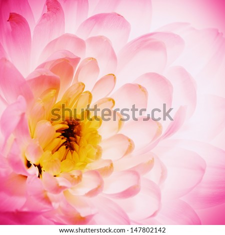 Lotus flower petals as abstract natural backgrounds - stock photo