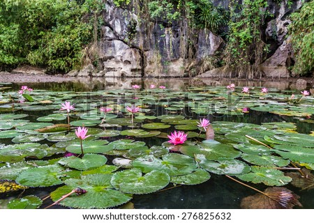 Lotus flowers at Hanoi, Vietnam
