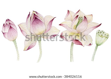 Lotus flowers painted in watercolor - stock photo