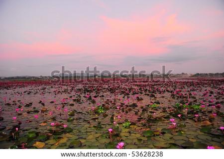 Lotus lake, Ta Le Noy, Thailand - stock photo