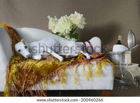 Lounging Bela in Pearls - stock photo