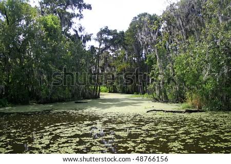 lousiana bayou - stock photo