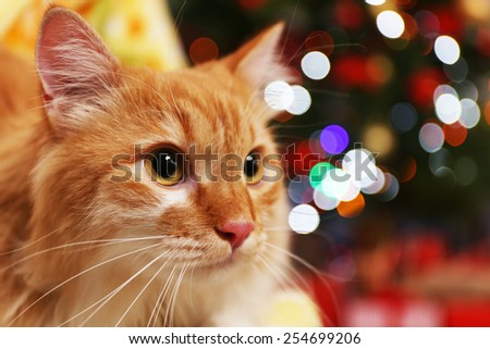 Lovable red cat on Christmas tree background - stock photo