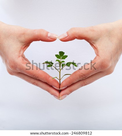 Love and protect nature concept with seedling in woman heart shaped hands - stock photo
