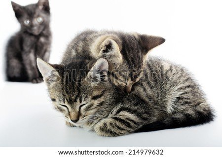 Love and solitude concept with cats, isolated on white background - stock photo