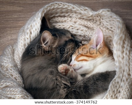 Love and tenderness. Big gray cat and a small cat sleeping together, hugging each other. Cat paw affectionately hugging cat. Cute cats, family - stock photo