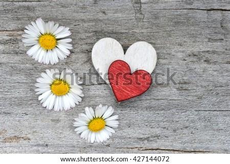 Love background. Valentines background. Love background. Valentines Day background with heart and daisy flowers. Love background. Valentines background  with copy space. Valentines background.   - stock photo