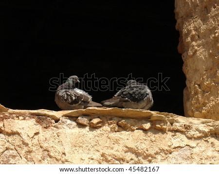 love birds - stock photo