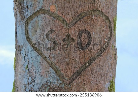love heart with message in a tree bark - stock photo