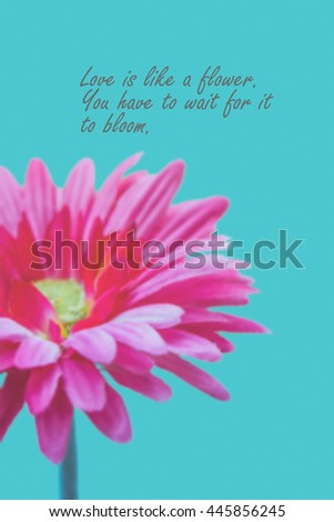 Love Quotes On Pink Gerbera Flower Background