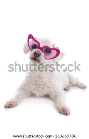 Love sick puppy looking through rose coloured heart glasses.