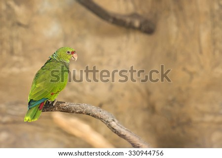 Lovebird Parrot sitting on a branch - stock photo