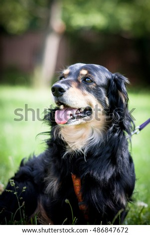Lovely and cute dog with funny face. Interesting dog breed. Dog photography outdoor.  Animal shot capturing dog.