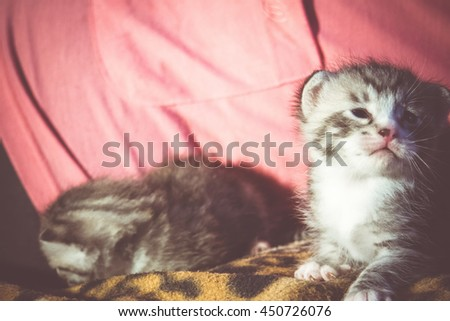 Lovely baby tabby kitten close up background, vintage colors.