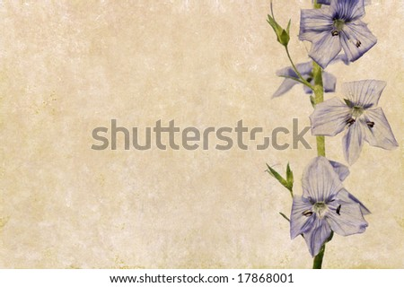 lovely background image with interesting texture and purple floral elements
