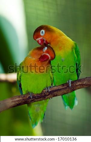 Lovely bird - stock photo