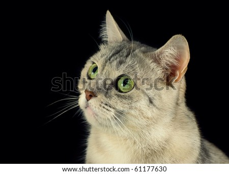 Lovely cat in black background - stock photo