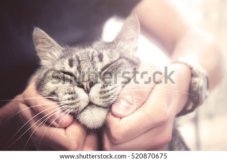 Studying the Bond Between a Cat and Its Human | Science ...