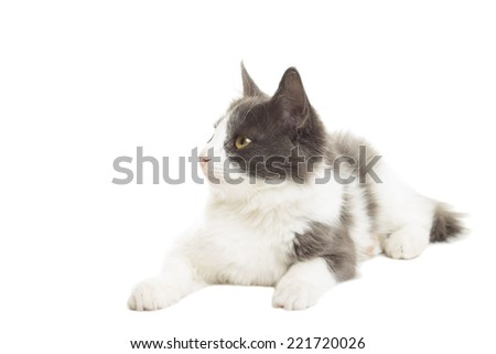 lovely cat lying on a white background on a white background - stock photo