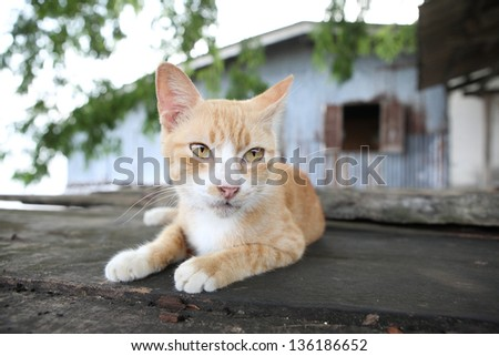 Lovely cat lying on balcony
