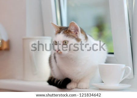Lovely cat sitting on the window sill among the white cup and the pitcher - stock photo