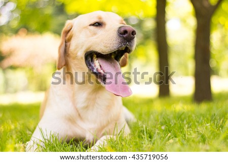 Lovely dog - stock photo