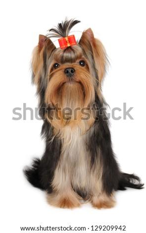 Lovely dog on white - stock photo