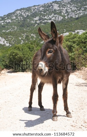 lovely donkey - taken at Sardinia, Italy - stock photo