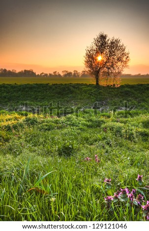 Lovely early morning spring scenery - sun rising over splendid lush greenery - stock photo