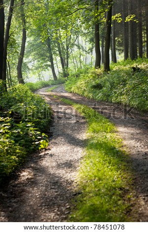 lovely forest path in early morning sunshine (shallow DOF; color toned image) - stock photo