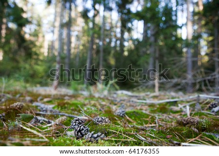 lovely forest scenery - pine tree cones lying in the moss (shallow DOF; sharp focus on the cone; very high native resolution) - stock photo