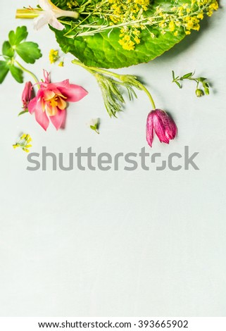 Lovely garden plant and flowers on light green background, top view, place for text - stock photo