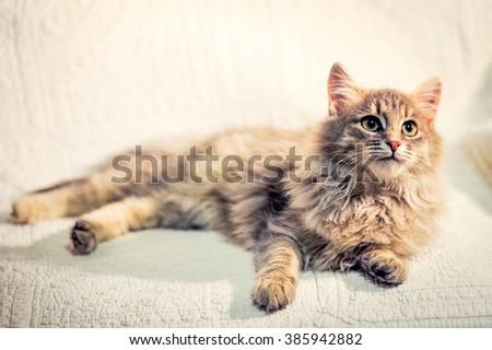 Lovely grey kitten lying on white cover - stock photo