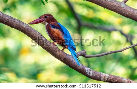 lovely kingfisher sitting in tree branch