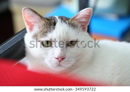 Lovely kitten sleeping on the bed - stock photo