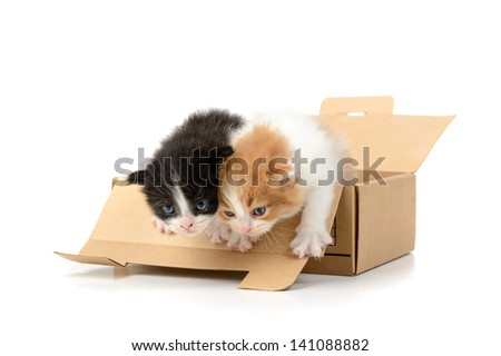Lovely kittens inside a cardboard box isolated in white - stock photo