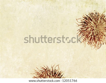 lovely light brown background image with interesting texture, floral elements and plenty of space for text - stock photo
