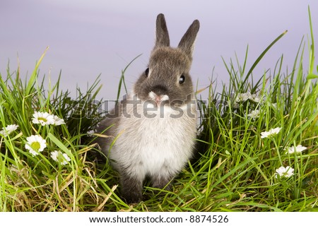 Lovely little easter bunny on a patch of grass and daisies - stock photo
