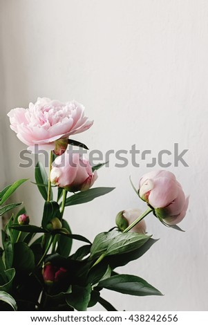 lovely peony pink and white flowers on background of wall, space for text, celebration greeting card concept