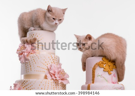 Lovely pets destroyed wedding cakes while sitting and having rest on them. Marchpanes, bow-knots and topping on rosy cakes on white background.