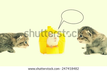 lovely playful kittens and pet rat - stock photo