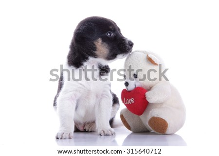 Lovely puppy dog sitting with his teddy bear friend, isolated on white background - stock photo