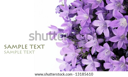 lovely purple flowers against white background - stock photo