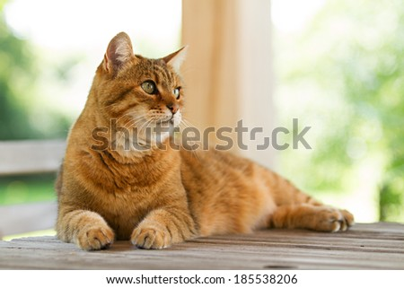 Lovely red cat on wooden table - stock photo