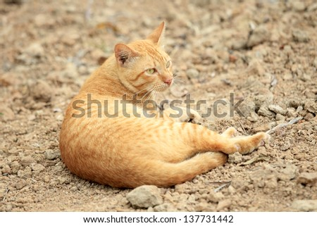Lovely red cat relaxing on the ground